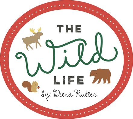 Introducing: The Wild Life!